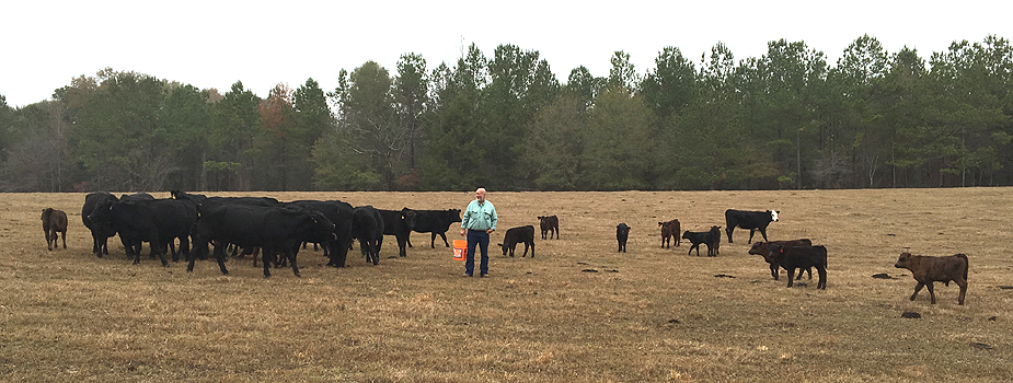 Measures of Herd Performance: Weaning Weight