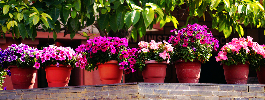 Tips on Buying Container Plants