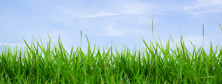 Pasture Management in the Winter-Spring Transition