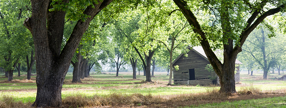 Fertilize Old Pecan Trees to Improve Production