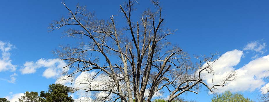Dead Trees Can Be Hazardous to Your Health