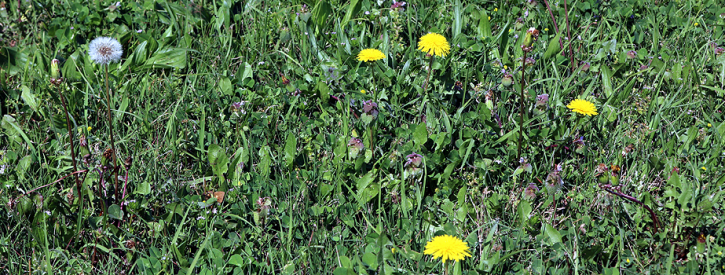Herbicide Knowledge Required to Control Weeds