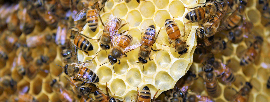 Beginner Beekeeping Course Returns in January