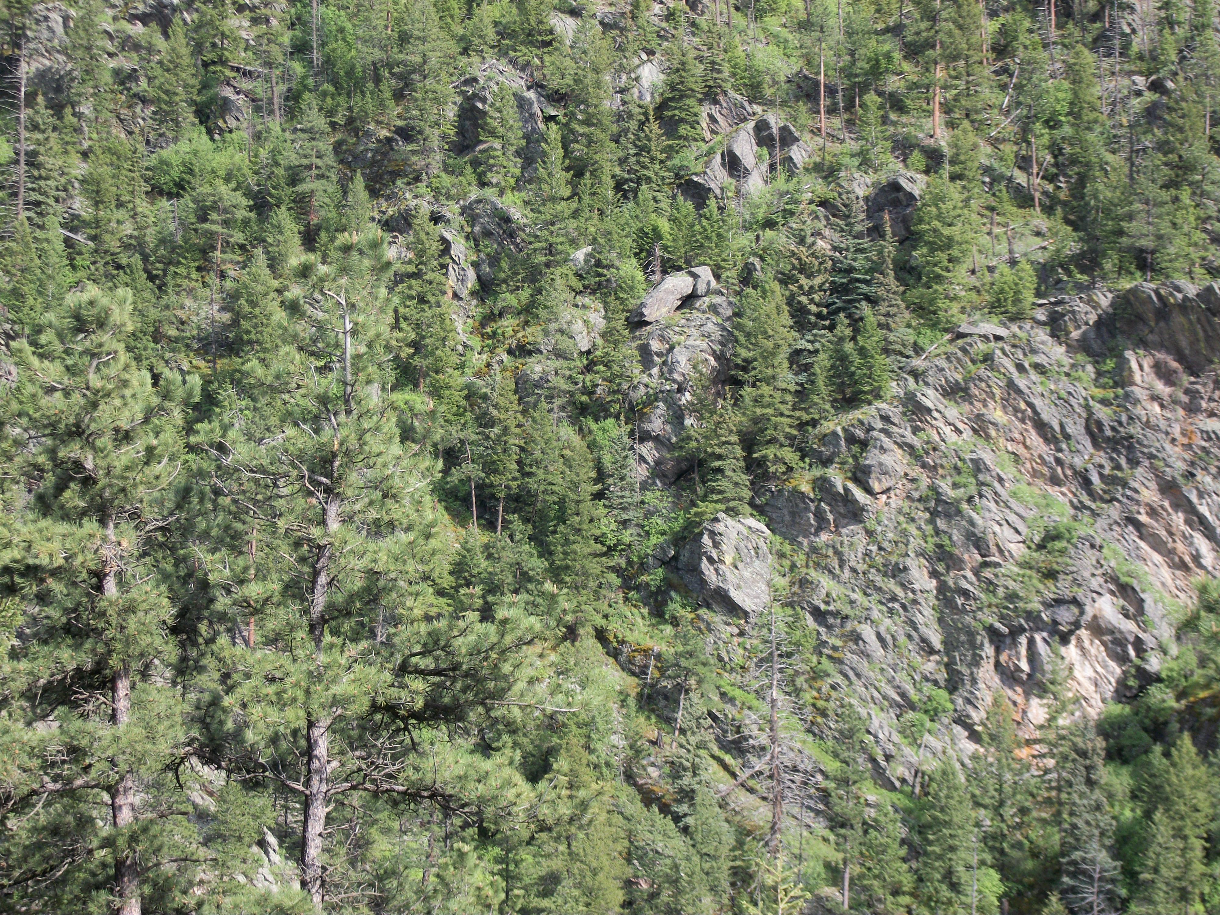 Buckhorn Canyon, CO